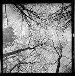 dans la forêt II