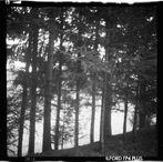 dans la forêt III