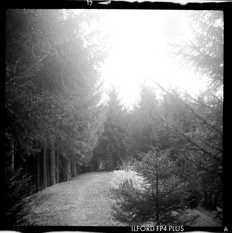 dans la forêt IV