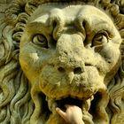 Dans la gueule du lion...