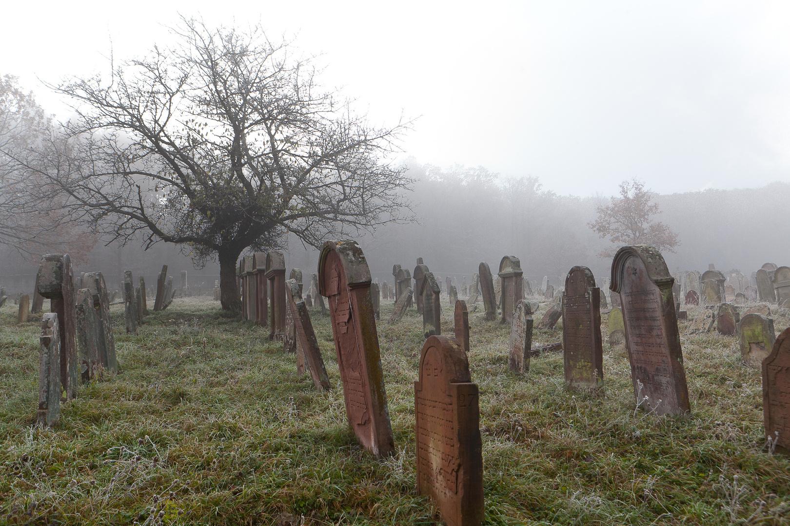 Dans le brouillard et le silence