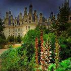 Dans  le parc de Chambord / Val de Loire