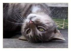 *dans le regard du chat*