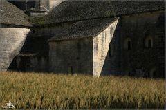 """""""Dans les blés"""""""