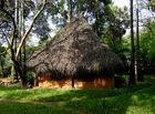 Dans les bois d'Auroville ! ...