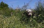 Dans les grandes herbes