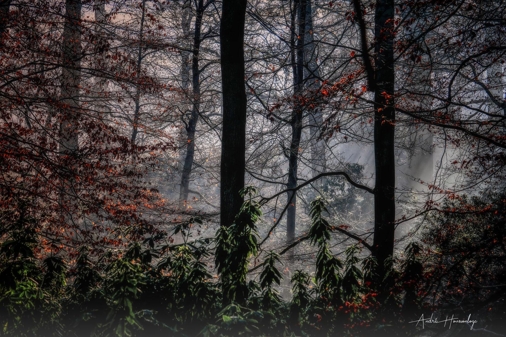 Dans ma forêt