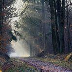 """"""" Dans nos forêts """""""