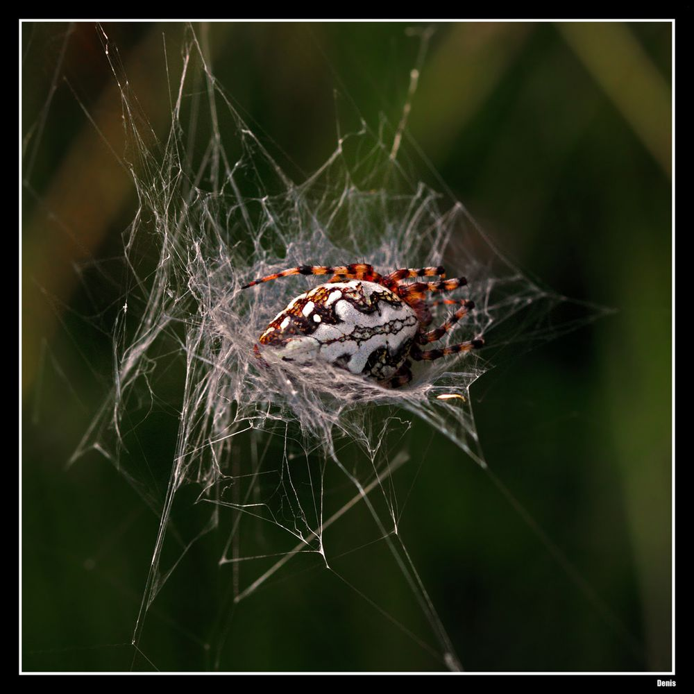...Dans son nid...