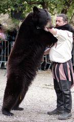 Danse avec l'ours ...