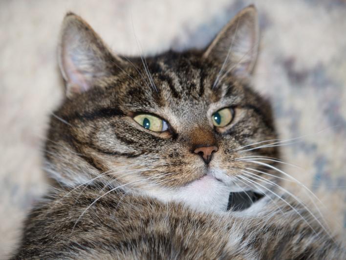 Darf ich vorstellen - Sheila, unsere Hauskatze.