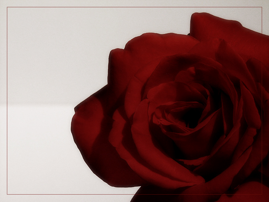"""dark rose"""