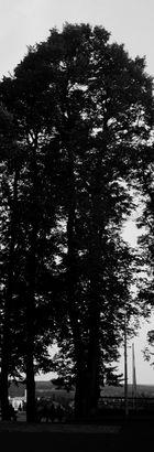 darkest night II