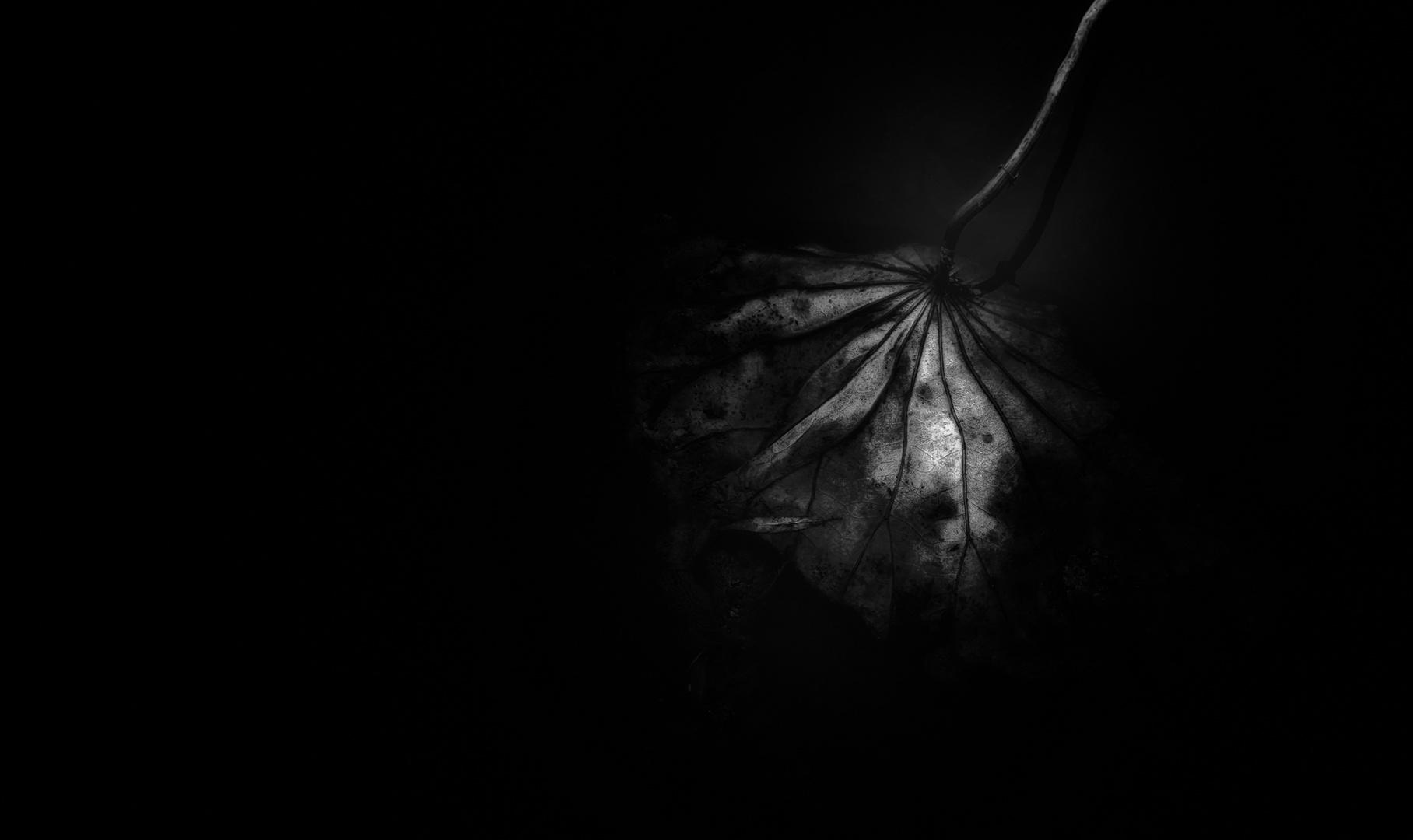 dark.flower