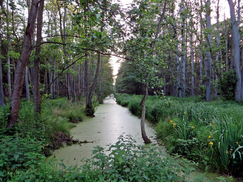 darßer urwald 1 foto  bild  world pflanzen mecklenburg
