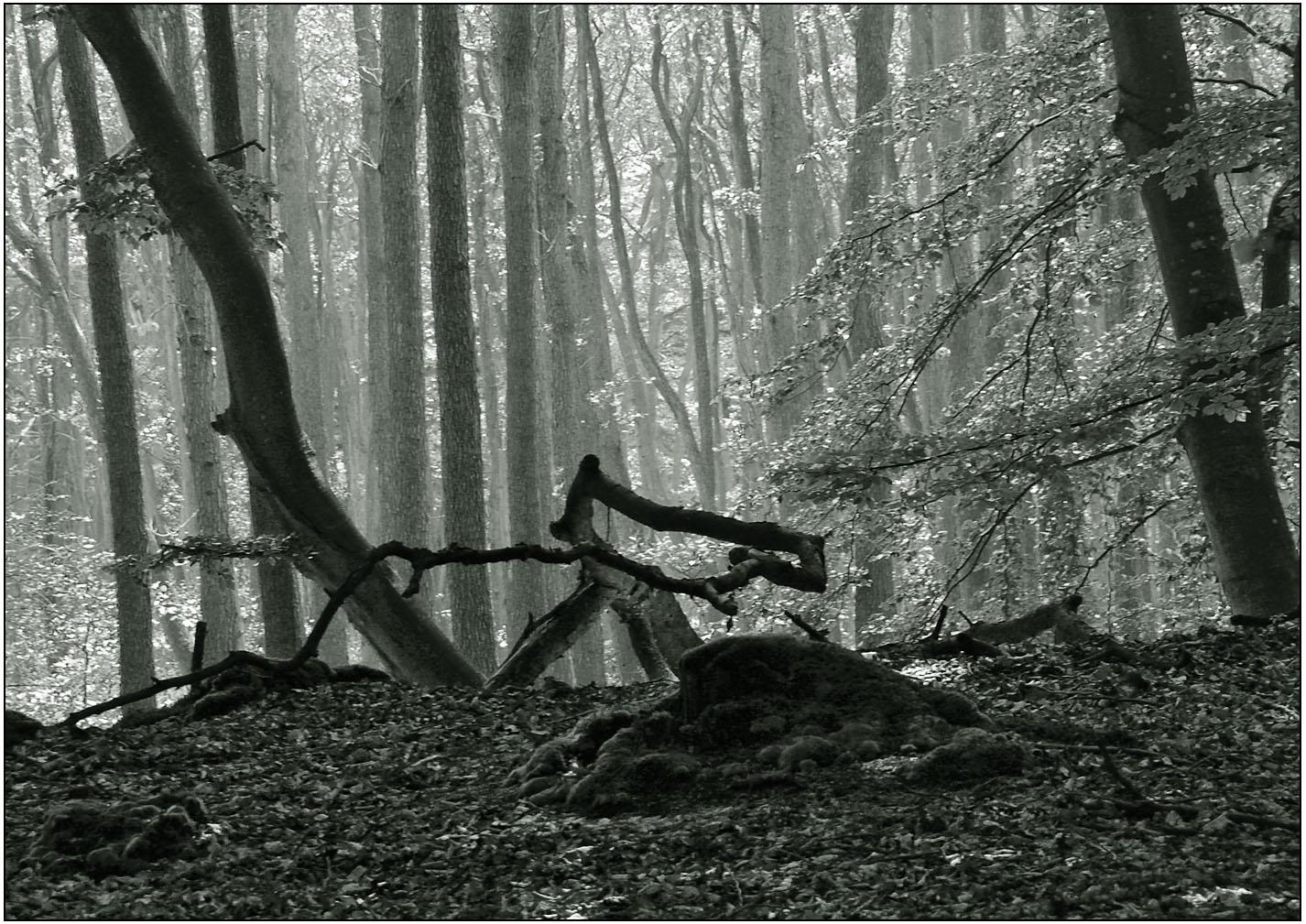 darßer urwald 12 foto  bild  landschaft wald natur