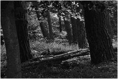 Darßer Urwald (15)