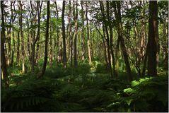 Darßer Urwald (3)