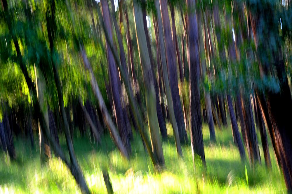 Darßer Urwald auf dem Fischland an der Ostsee