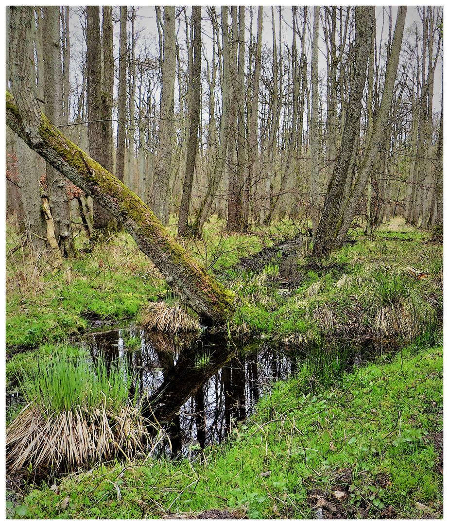 darßer urwald foto  bild  world wald wasser bilder auf