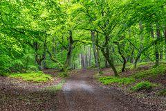 Darßer Wald-Mittelweg_7662