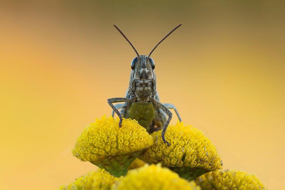 darth vader foto bild tiere wildlife insekten bilder. Black Bedroom Furniture Sets. Home Design Ideas