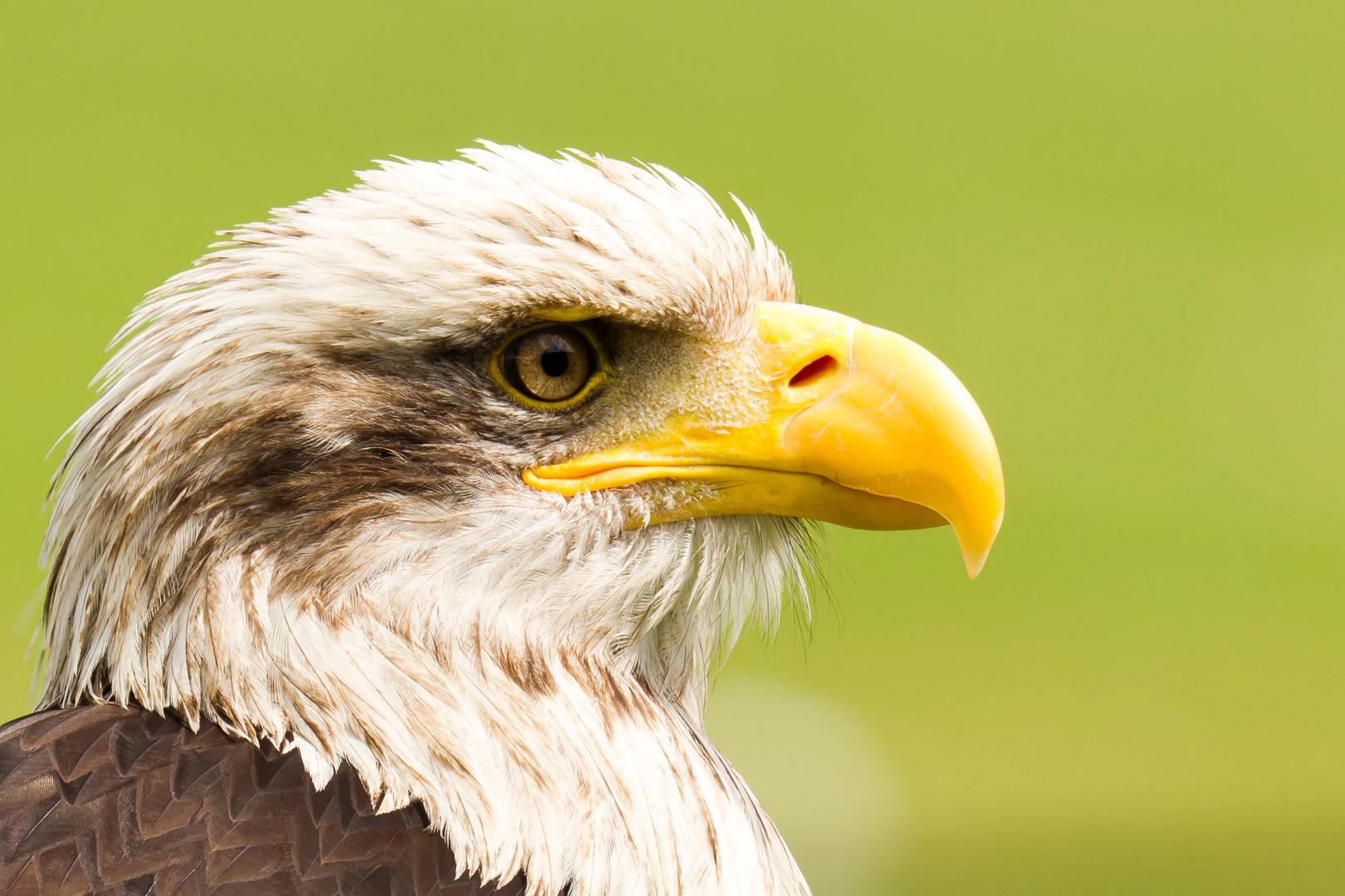 Das Adlerauge sieht alles