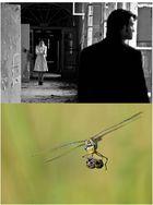 Das alternative fotografische Solo 48 (zwei Fotos von Alexander Dacos)