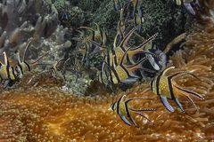 das Aquarium im Meer