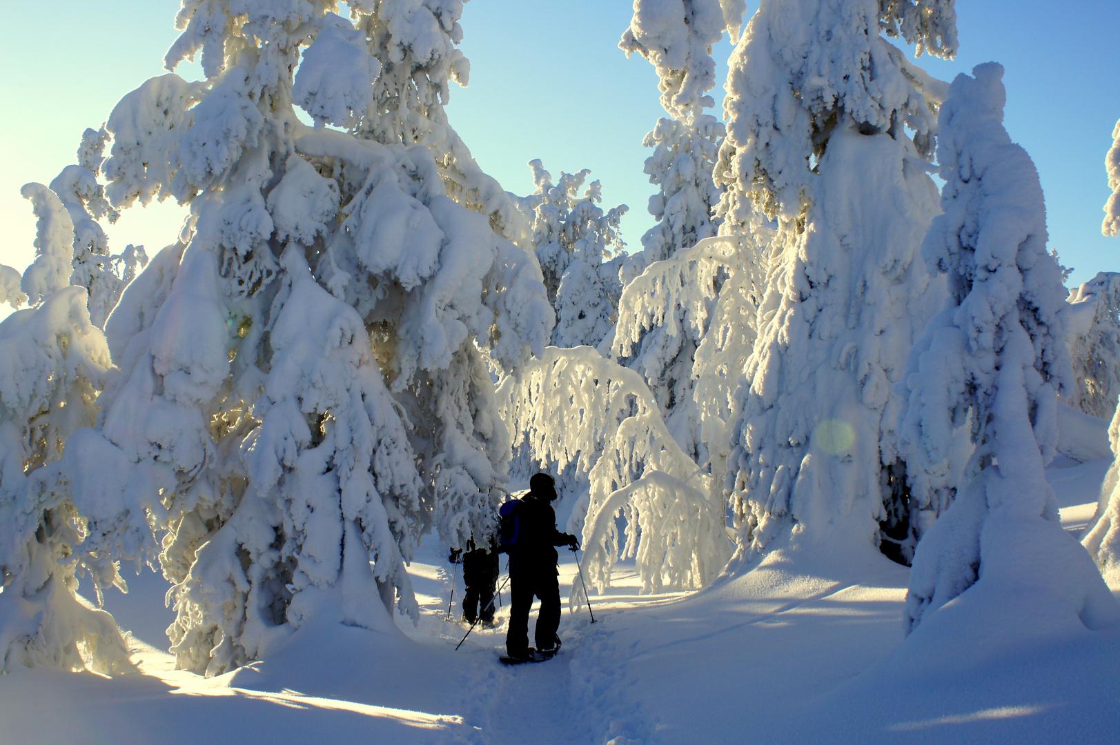 Das Auenland im Winter ;-)