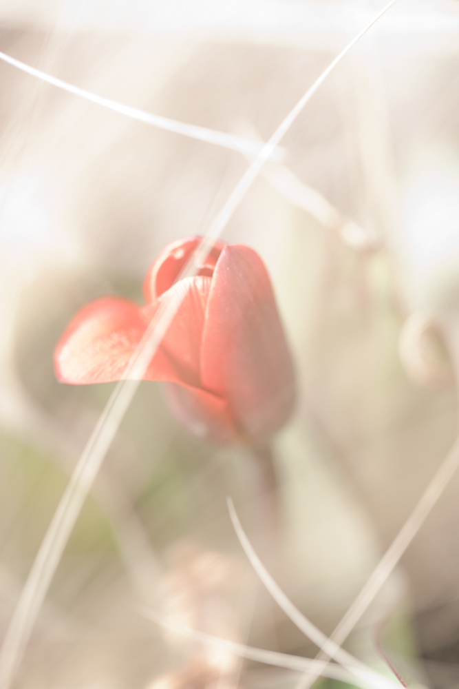 Das Aufkeimen des jungen Frühlings