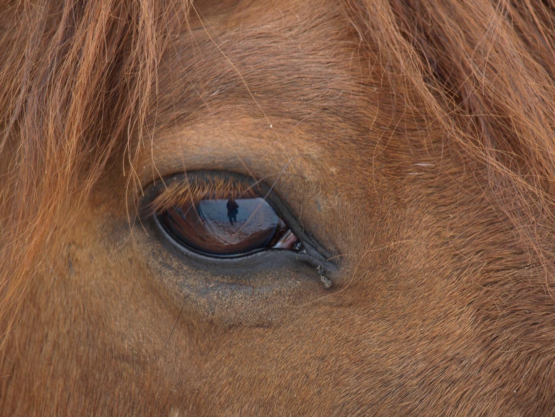 """""""das Auge"""""""