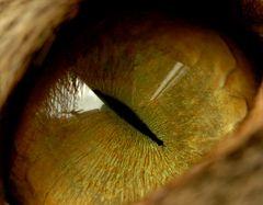 Das Auge als Landschaft!