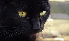 Das Auge der Katze