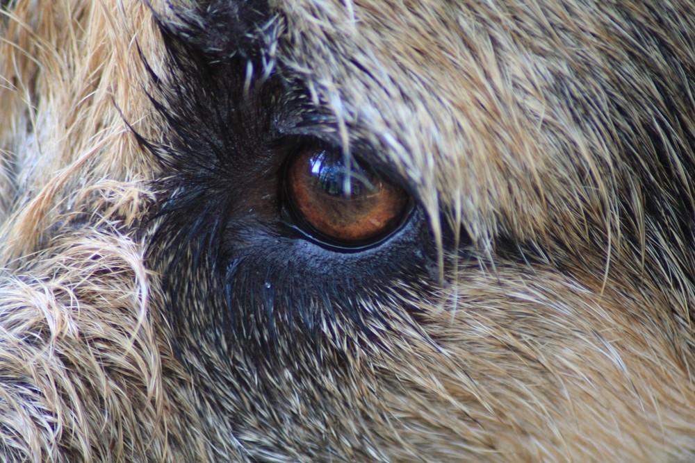 Das Auge der Lotte
