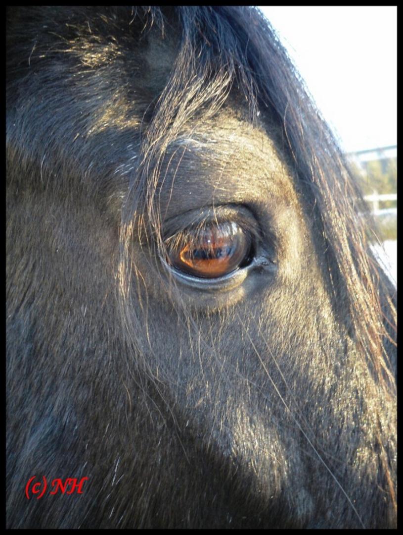 Das Auge Der Spiegel Der Seele Foto Bild Tiere Haustiere