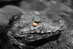 Das Auge des...