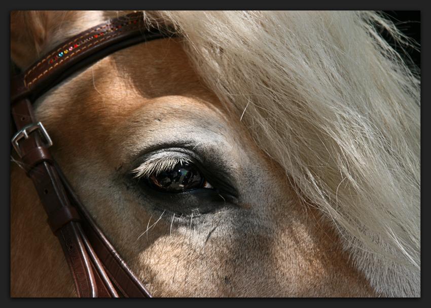 Das Auge des Herkules