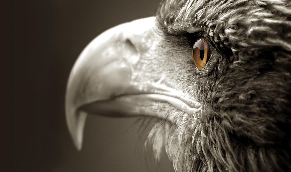 Das Auge des Jägers