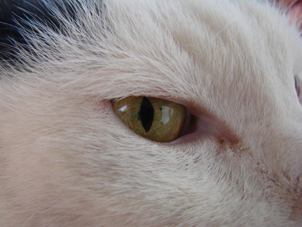 Das Auge des Tigers ...