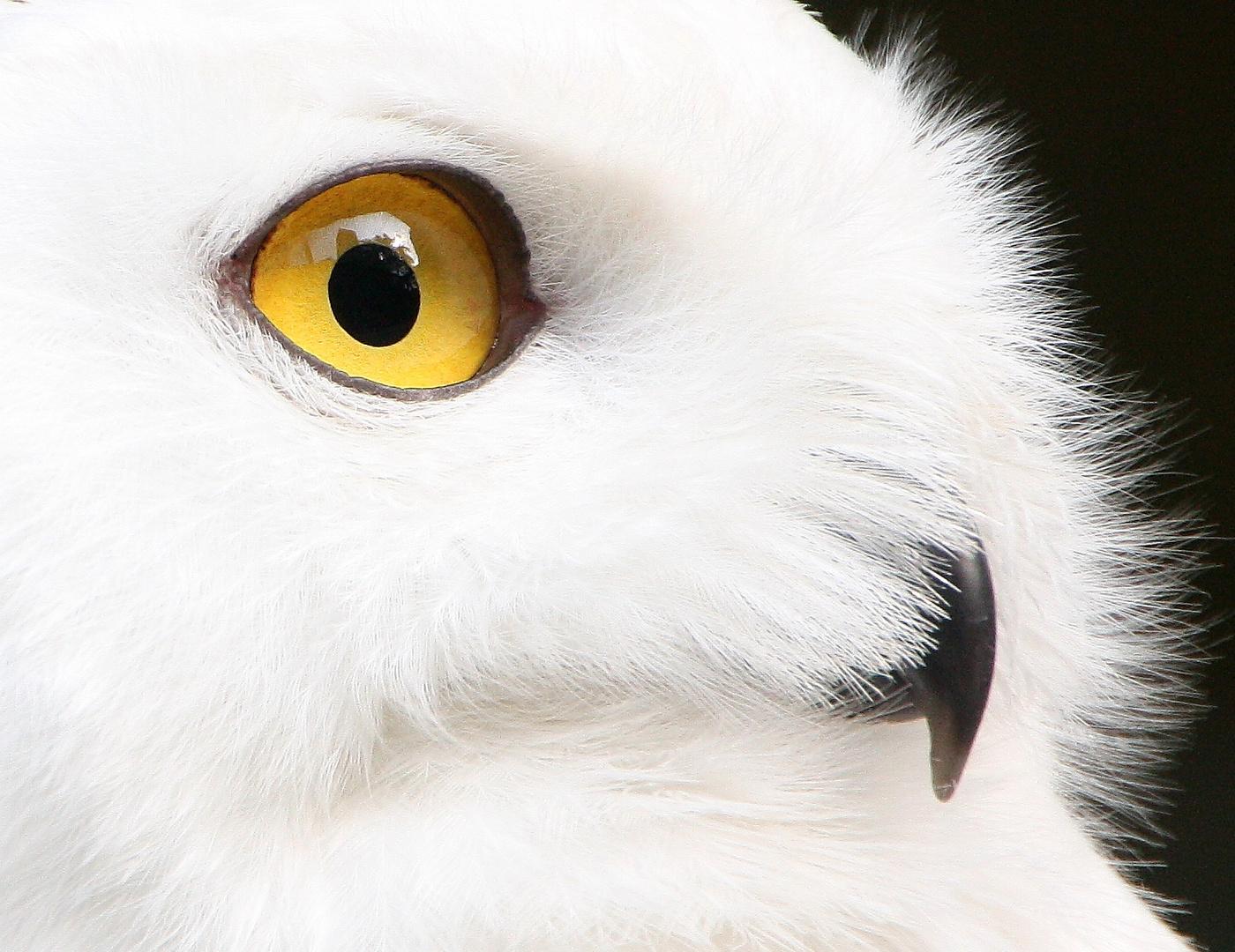 Das Auge Spiegel Der Seele Foto Bild Tiere Zoo Wildpark