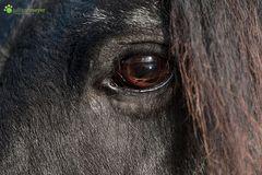 Das Auge von Fedde