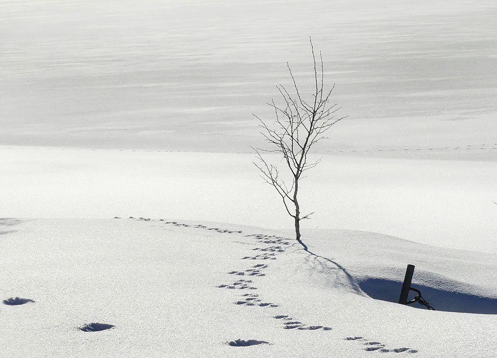 Das Bäumchen am Sihlsee