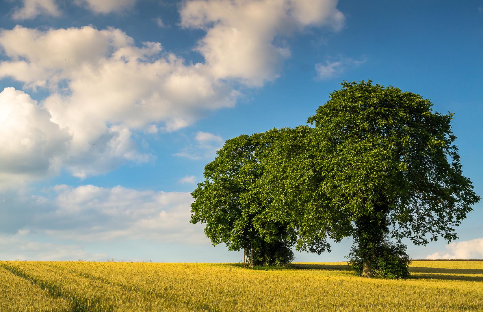 Das Baumduo