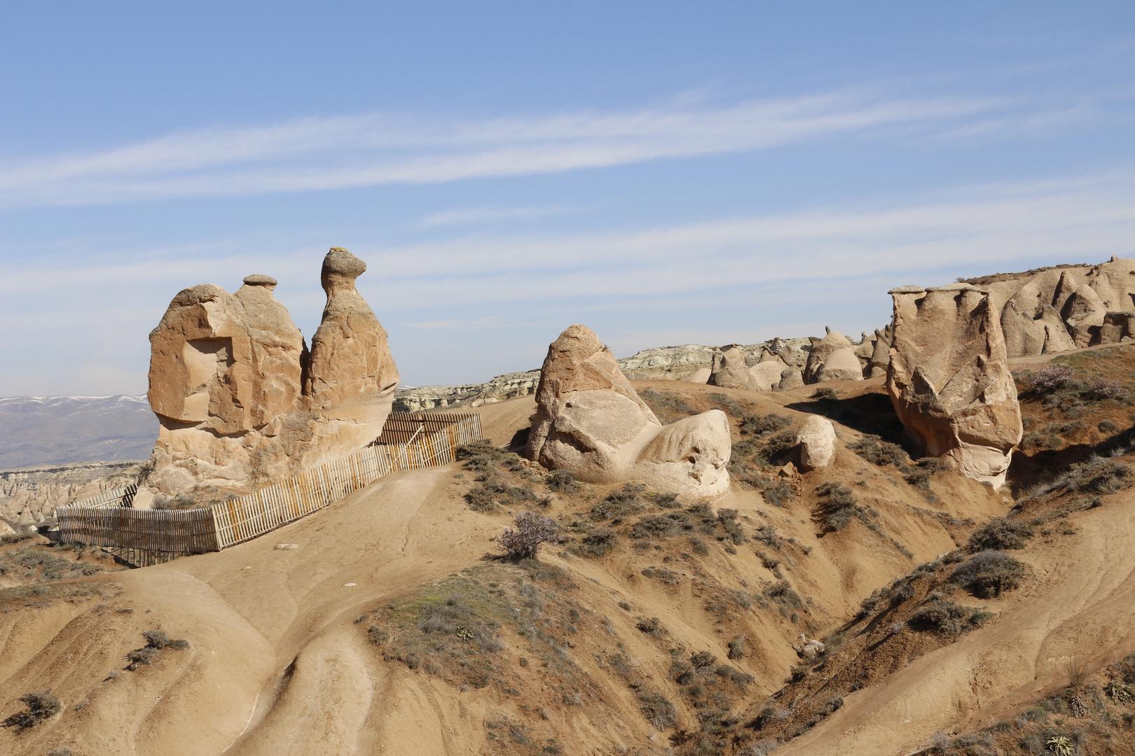 das berühmte Kamel in Kapadokien
