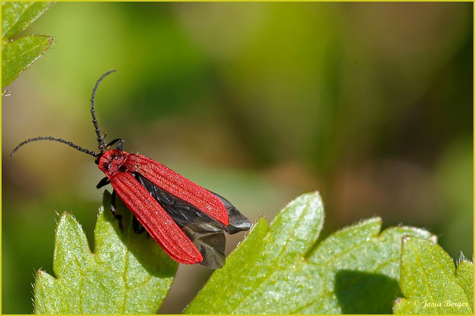 Das besondere Insekt
