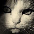 das Beste an mir ist meine Katze