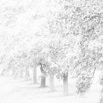 das Bild zu Ludovico Einaudis white trees von mir