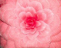 Das Blütenherz
