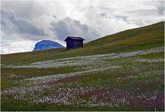 Das Blumenmeer auf den Armentara-Wiesen